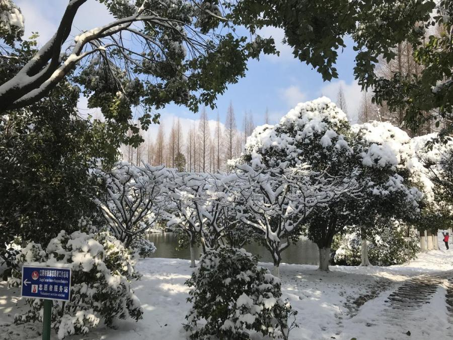 Sneeuw en blad aan de bomen